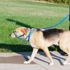 $9.99 for a Holt Head Dog Collar