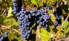 Grape Beginnings Hands on Winery - Eatontown: $99 for an Intro to Winemaking Experience for Two at Grape Beginnings ($198 Value)