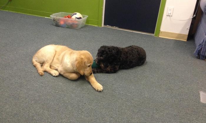 Etta's Blvd Doggy Day Care - Verona: $23 for $50 Worth of Pet Daycare — Etta's Blvd Doggy Day Care