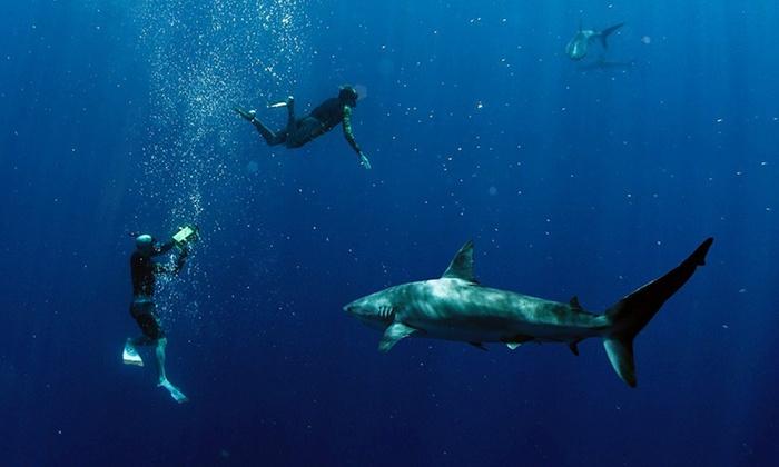 Hawaii Adventure Diving - Hawaii Adventure Diving: Up to 26% Off Shark Diving at Hawaii Adventure Diving