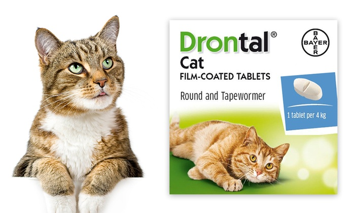 Drontal Cat Worming Tablet Multi Packs from £5 99 With Free Delivery