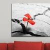 Touch of Color Photography on Gallery-Wrapped Canvas Prints