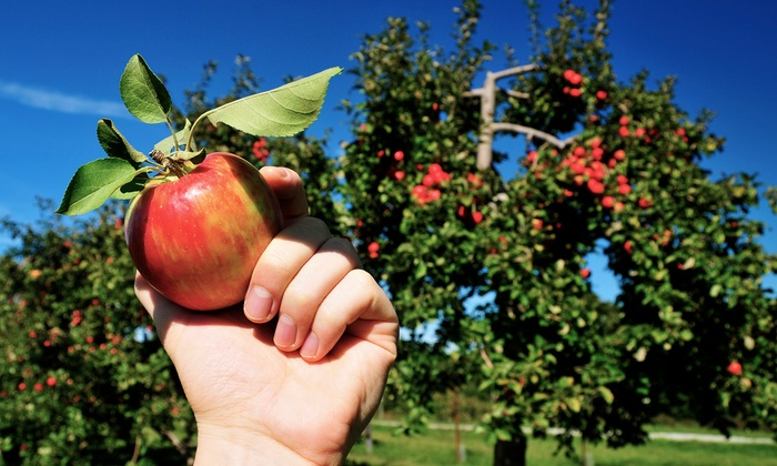 Hillcrest Orchards - Amherst: $14 for an Orchard Day for Four at Hillcrest Orchard ($28 Value)