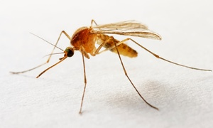 Dart Pest Control: One or Two Mosquito Treatments with Optional One or Two Bee-and-Wasp Treatments from Dart Pest Control (Up to 74% Off)