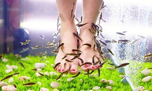 (Beauté)  Séance de fishpedicure -50% réduction