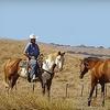 Half Off Horseback Ride in Milpitas