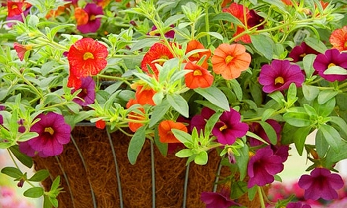 Cooley's Greenhouse - Plain City: $15 for $30 Worth of Plants and More at Cooley's Greenhouse in Plain City
