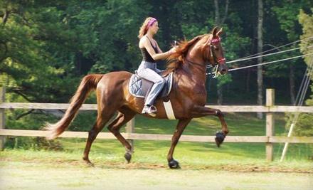 Rocking S Farm Riding Academy - Rocking S Farm Riding Academy in Helena