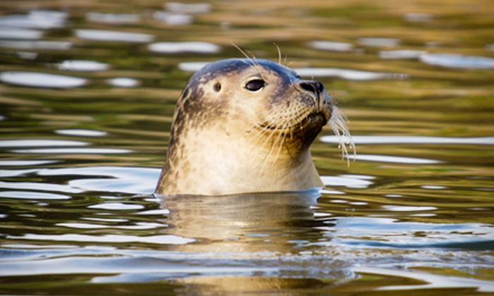 American Princess Cruises - Queens: Seal-and-Bird-Watching Tour for One, Two, or Four from American Princess Cruises in Queens (Up to 55% Off)