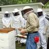 69% Off Beekeeping Class in Seguin