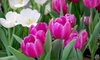 Gales Garden Center - Maple Heights: $9 for $20 Worth of Plants and Garden Supplies at Gale's Garden Center