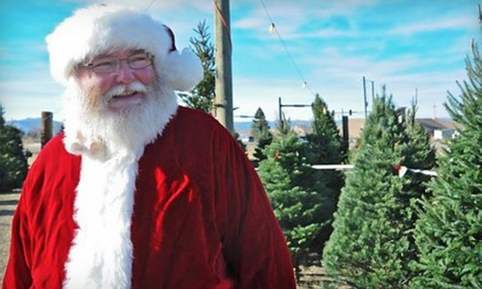 CreekSide Tree Nursery - Longmont: 5'–7' or 7'–8.5' Christmas Tree with Complimentary Hot Chocolate at CreekSide Tree Nursery (Up to 54% Off)