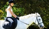 Chamounix Equestrian Center - Fairmount Park: $17 for One-Hour Group Riding Lesson at Chamounix Equestrian Center ($35 Value)