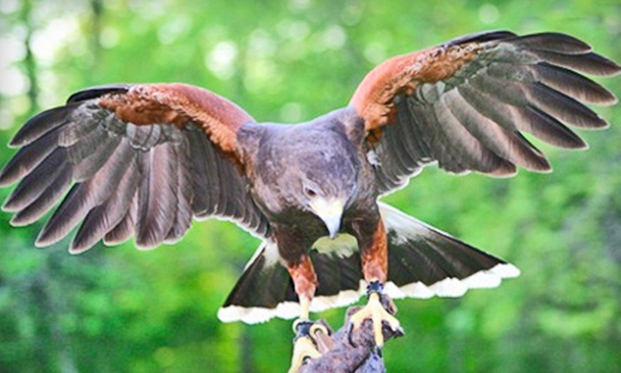 Save Our American Raptors - Trenton: Interactive Raptor Experience for Two or Four at Save Our American Raptors