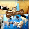 SoBo Doggie Day Care - Locust Point: $5 for a DIY Dog Wash at SoBo Dog Daycare & Spa ($15 Value)