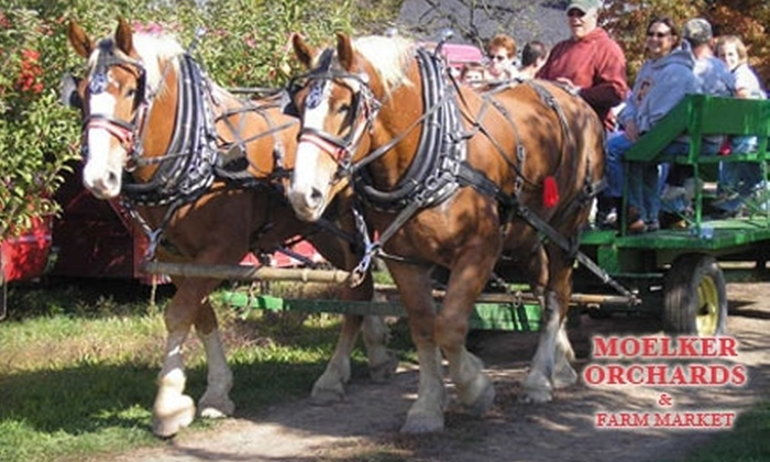 Moelker Orchards & Farm Market - Tallmadge: $4 for Two Tickets for a Horse-Drawn Wagon Ride at Moelker Orchards & Farm Market (Up to $9 Value)