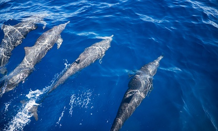 Dolphin-Watching Tour or Historical Cruise for Two or Four from Captains Source (Up to 55% Off)