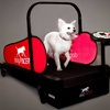 dogPACER Treadmills for Dogs