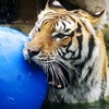 $8 for Admission for Two & More to the Austin Zoo