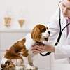 Up to 62% Off Dog or Cat Vet Services