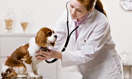 Comprehensive Wellness Exam or Annual Vaccinations for a Dog or Cat at Heart of Dixie Veterinary Clinic (Up to 62% Off)