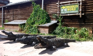 Crocodiles of the World: Crocodiles of The World: Entry (from £9) or Crocodile Keeper Experience (£99) (Up to 52% Off)