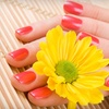 51% Off Shellac Manicure at Shear Perfection in Oakdale