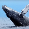 Up to 52% Off Whale Watching in Boothbay Harbor
