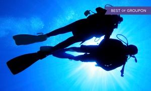 Gigglin Marlin Divers and Swim School: Discover Scuba, PADI Open-Water Certification, or Free-Diving Course at Gigglin' Marlin Divers (Up to 49% Off)