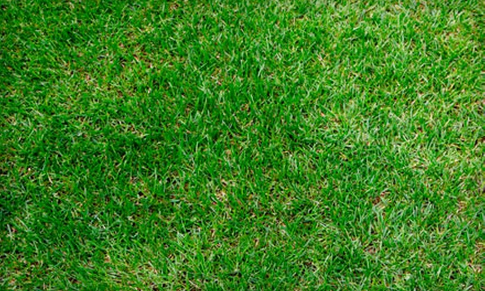 Agapé Lawn Co., LLC - East Durham: Lawn Aeration with Option to Add Fertilizer and Overseeding from Agapé Lawn Co., LLC