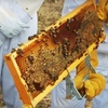 Up to 72% Off Beekeeping Class in Copper Canyon