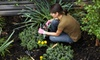 Mustard Seed Landscaping - St. Elmo Improvement League: $45 for Three Hours of Landscaping and Lawn Care from Mustard Seed Landscaping ($135 Value)
