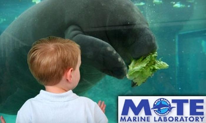 Mote Marine Laboratory and Aquarium  - City Island: Half Off Membership to Mote Marine Laboratory and Aquarium in Sarasota. Choose from Four Options.