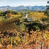 Wine-Country Getaway in Sonoma Valley
