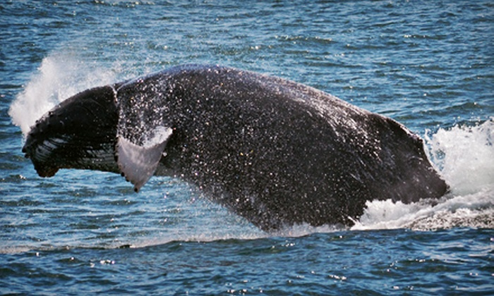 Cape May Whale Watcher - Cape May: Whale- and Dolphin-Watching Tour for One or Two from Cape May Whale Watcher (Up to 40% Off)