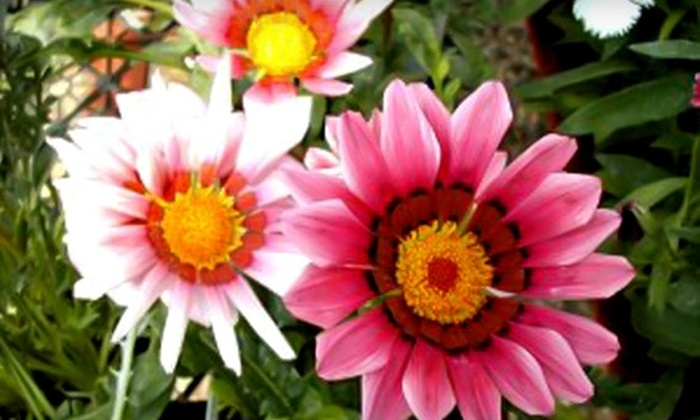 Green Acres Greenhouse - Watrous: $20 for $40 Worth of Annuals, Perennials, and Gardening Supplies at Green Acres Greenhouse in Watrous