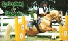 Springfield Stables - Brooklin: $25 for a One-Hour Group Riding Lesson, Including Helmet Rental, at Springfield Stables in Brooklin