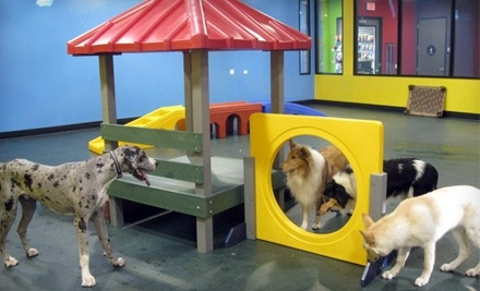 The Pampered Pet Hotel & Spa: Bathing and Brushing for a Small Dog - The Pampered Pet Hotel & Spa in Woodland Hills