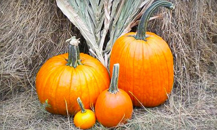 Mr. Gourdman's Pumpkin Patch - Derby: Outing for Two or Four to Mr. Gourdman's Pumpkin Patch