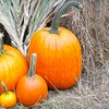 Half Off Pumpkin-Patch Outing for Two or Four