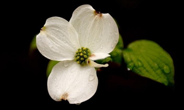 Gene Taylor Photography - Northeast Atlanta: Digital-Photography Class from Gene Taylor Photography at Atlanta Botanical Garden. Two Options Available.