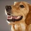 Bobbi Colorado's Canine Camp - Bobbi Colorado's Canine Camp: $150 Worth of Pet-Boarding Services