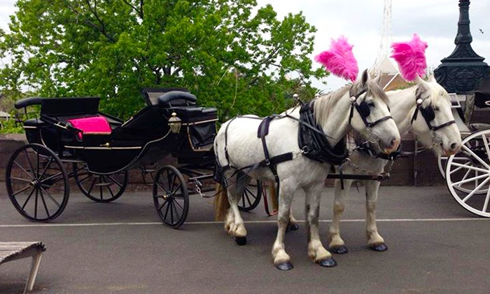 Image result for horse and carriage hire