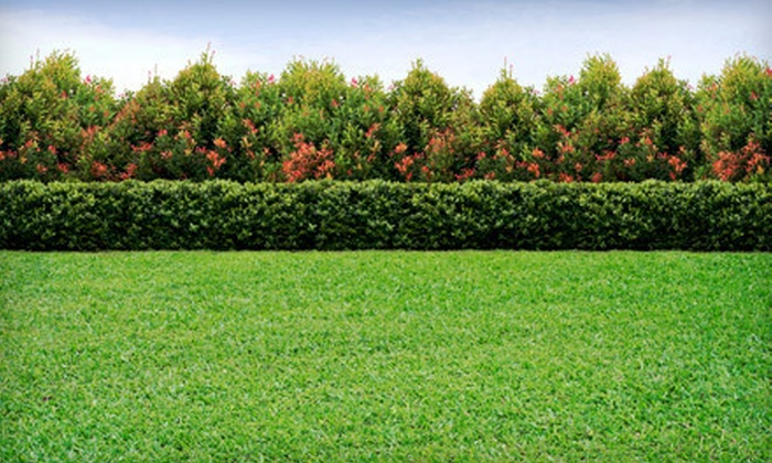 Greeney Land Services - Clarendon Hills: $80 for Aeration and Overseeding of Lawn Up to 10,000 Square Feet from Greeney Land Services ($165 Value)