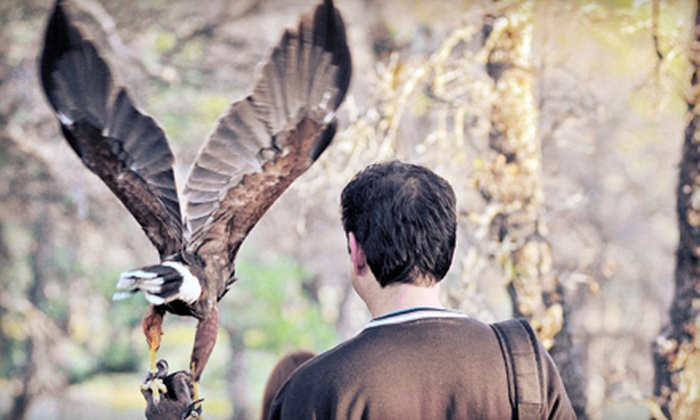 West Coast Falconry - Washington Trail: Falconry Lesson for Two or Owl Encounter for One or Two at West Coast Falconry in Marysville (Up to 55% Off)