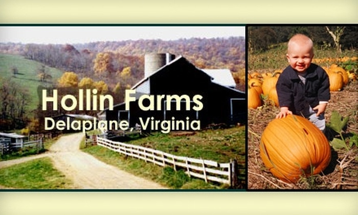 Hollin Farms - Marshall: $7 for $15 Worth of Pumpkins and Produce at Hollin Farms