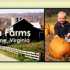 $7 for Pumpkins and More at Hollin Farms