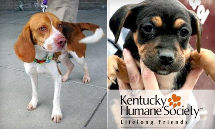 Kentucky Humane Society - Multiple Locations: $40 for Six-Week Behavior-Training Class Plus 10% Off Private, At-Home Lessons with the Kentucky Humane Society ($85 Value)
