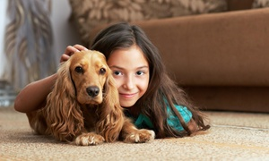 Hit the Spot Carpet Cleaning: Up to 77% Off Carpet Cleaning at Hit the Spot Carpet Cleaning