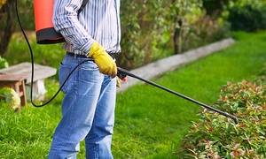 A+ Pest Control: Basic Interior and Exterior Pest-Control Treatment with Optional Rodent Removal from A+ Pest Control (Up to 61% Off)
